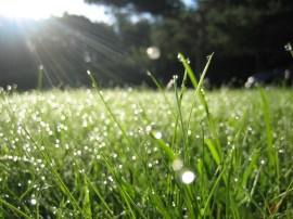 morning-dew-fresh-christ-manna-1024x768[1]