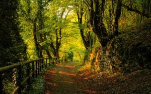 Walking-path[1]