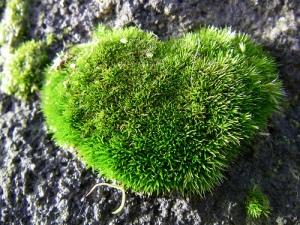 soft-heart[1]