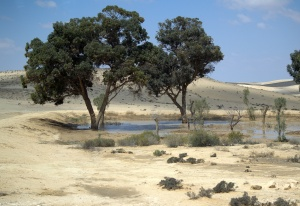 Jewish_National_Fund_trees_in_The_Negev[1]