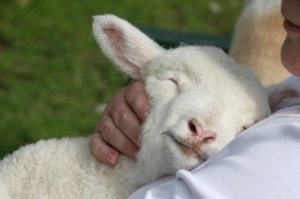 holding-lamb[1]