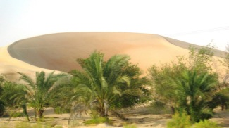 Oasis in the Liwa desert