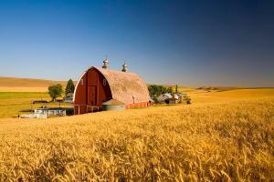 sunset-barn-and-wheat-field-steptoe-craig-tuttle