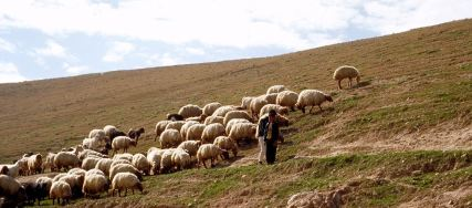 shepherd-in-wilderness1