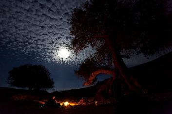0014 - tour negev night fire tree