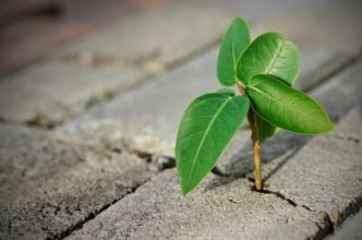 plant in crack