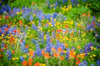 NR_Nearby_Wildflowers_125577329_stock_EdmundLowe