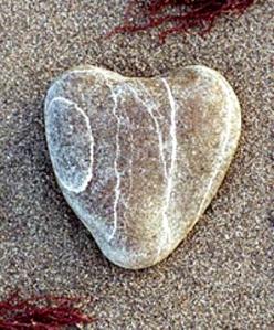 callus heart