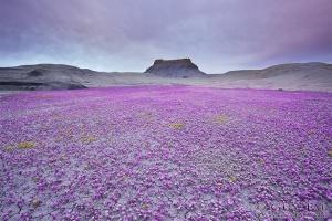 Badlands Desert