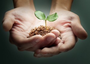 hands_sprout_iStock_7221140-300x213 (1)