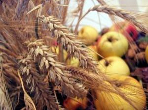 harvest-thanks-giving_260429