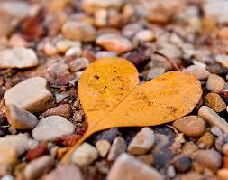 heart leaf on stone