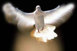 holy spirit dove in flight