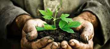 Grow.-Plant.-Discipleship