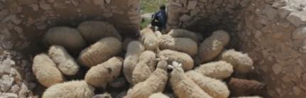 sheepfold2-417206_623x200