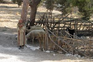 A shepherd at his sheep gate near Nazareth
