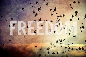 50623-freedom