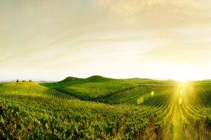 workers-vineyard