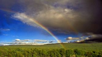 rainbow-forest-468